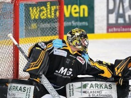 Timo Herden, Bayreuth Tigers