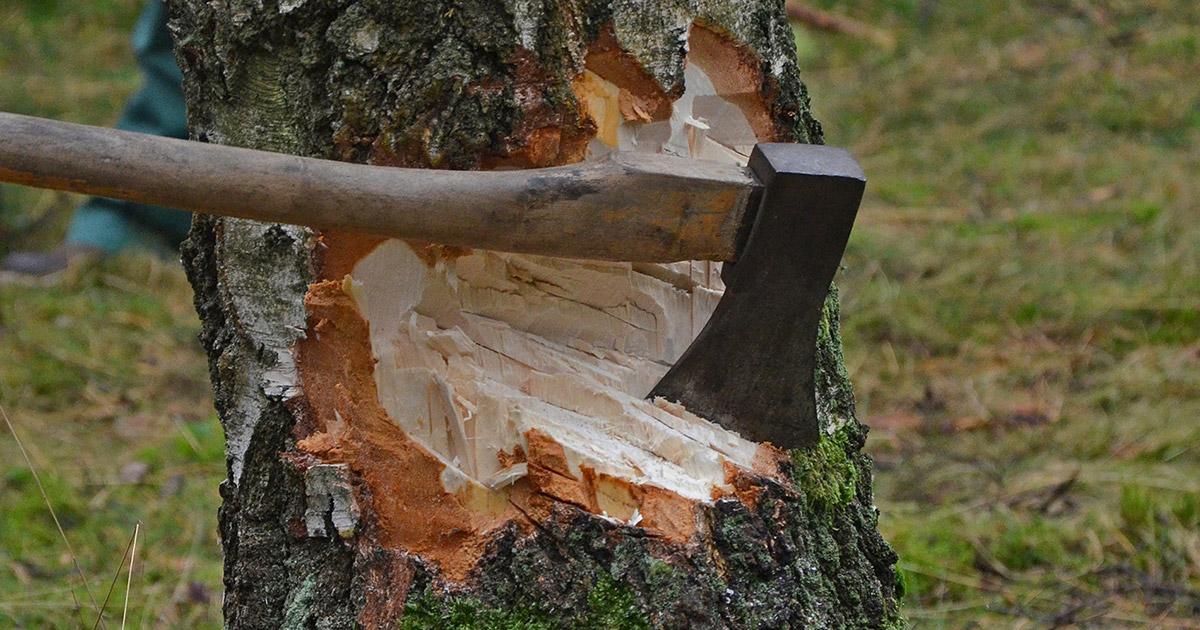 Lokalnachrichten Bayreuth: Fällen von Bäumen - Was ist erlaubt?